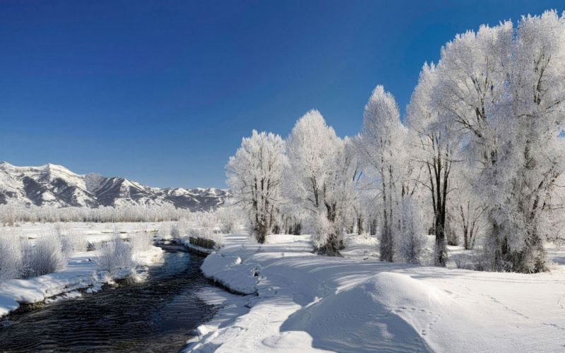 Trees Hoarfrost Winter River Source Current Day wallpaper