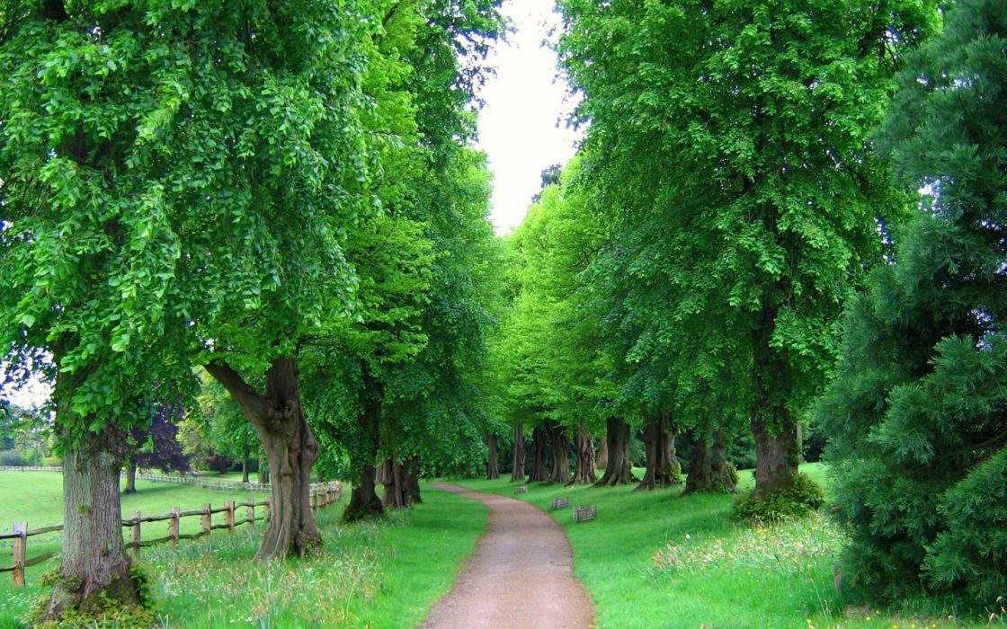 England Trees Park Avenue Fence wallpaper