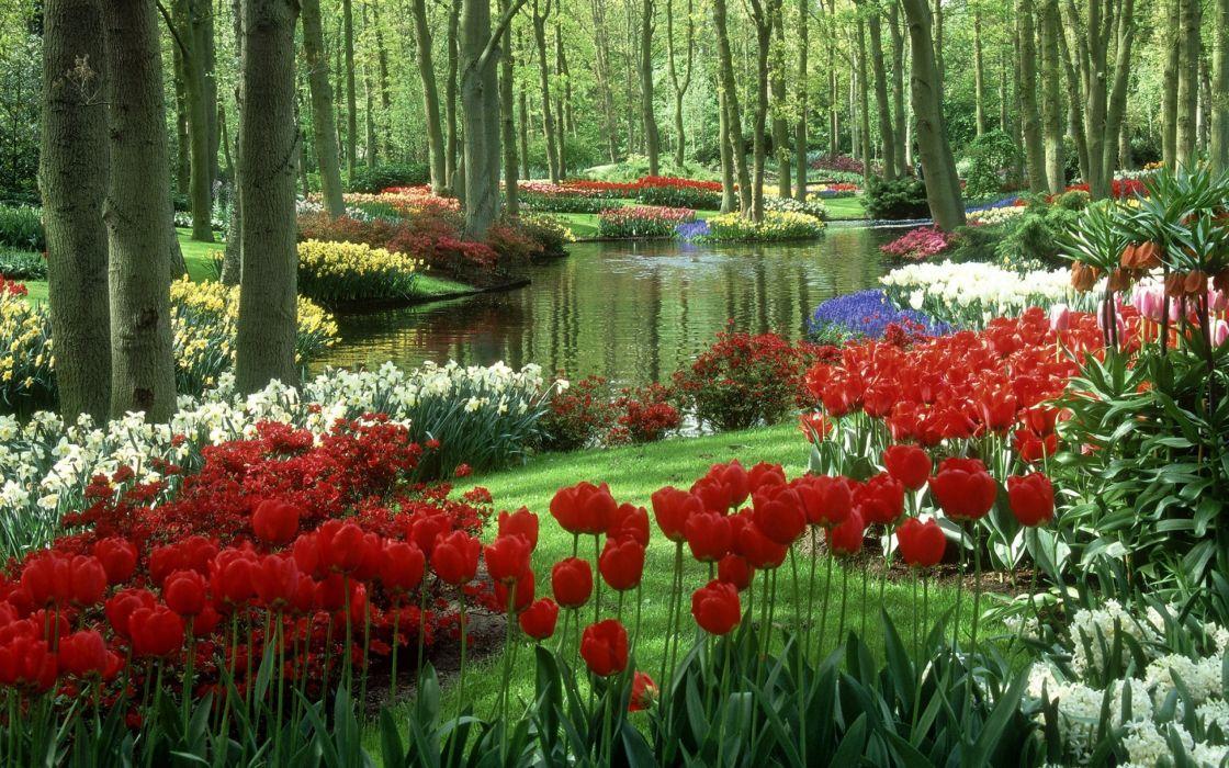 Tulips Daffodils Ornamental lake Trees Garden Netherlands Beauty wallpaper