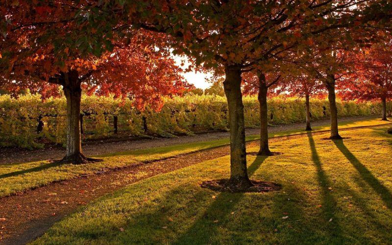 Grass Autumn trees wallpaper