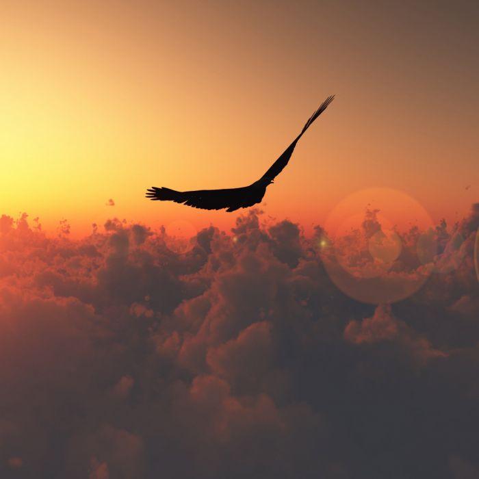 Bird Flight Sun Patches of light Clouds Freedom Height wallpaper