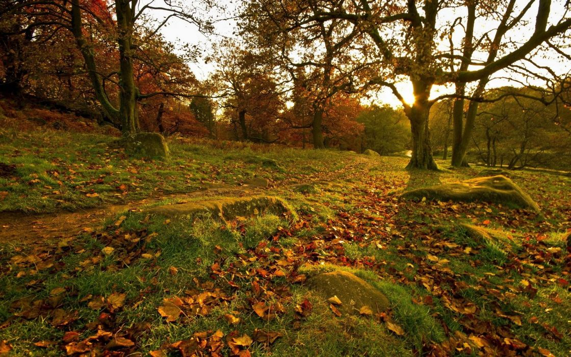 Park Fall Forest Leaves Trees Rocks Grass wallpaper