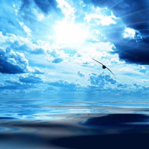Bird Flight Wings Height Clouds Sky Dark blue White Light Sun Sea Surface wallpaper