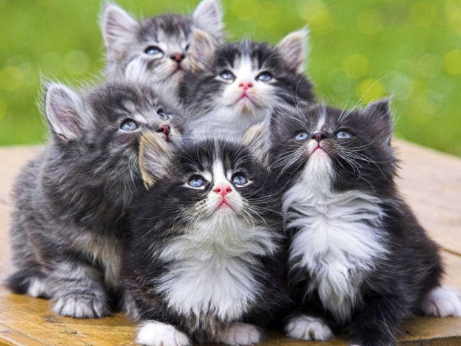 Kittens Babies Cute Spotty Curiosity wallpaper