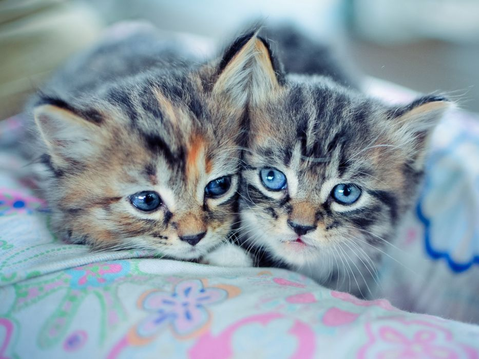 Kittens Couple Down Cute wallpaper