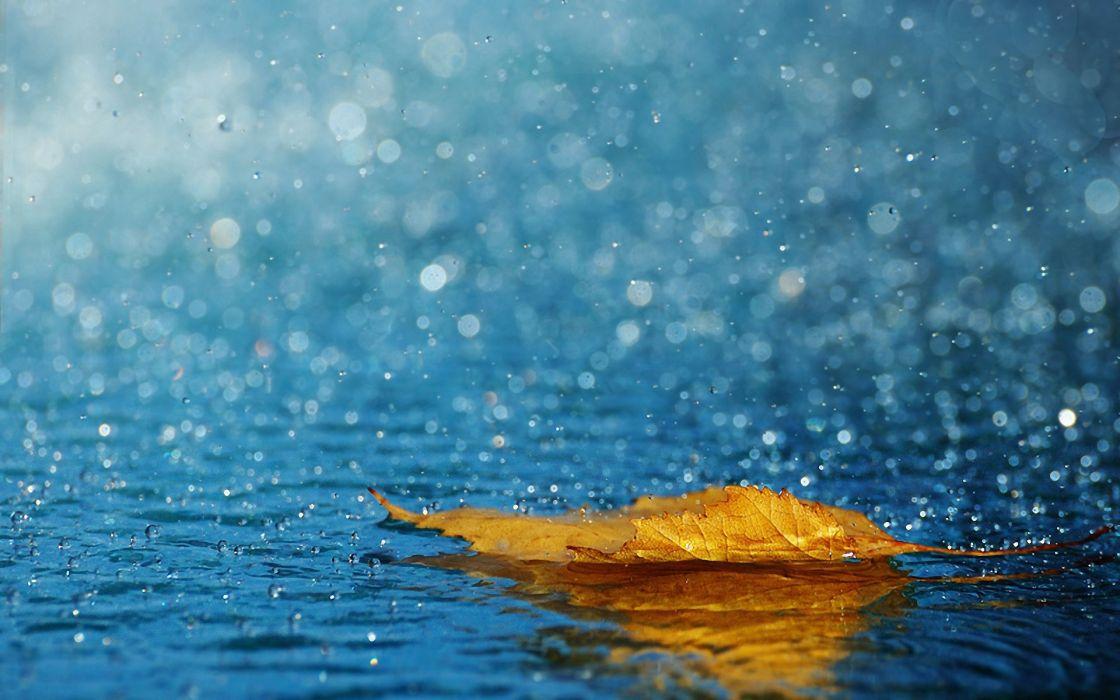 Leaf Drops Rain Autumn Water wallpaper