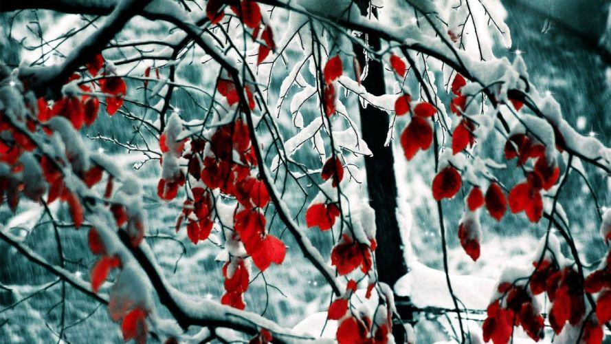 landscape tree red leaf beauty nature wallpaper
