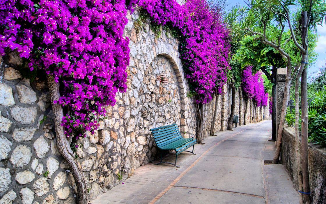 flower street beautiful stone wall wallpaper
