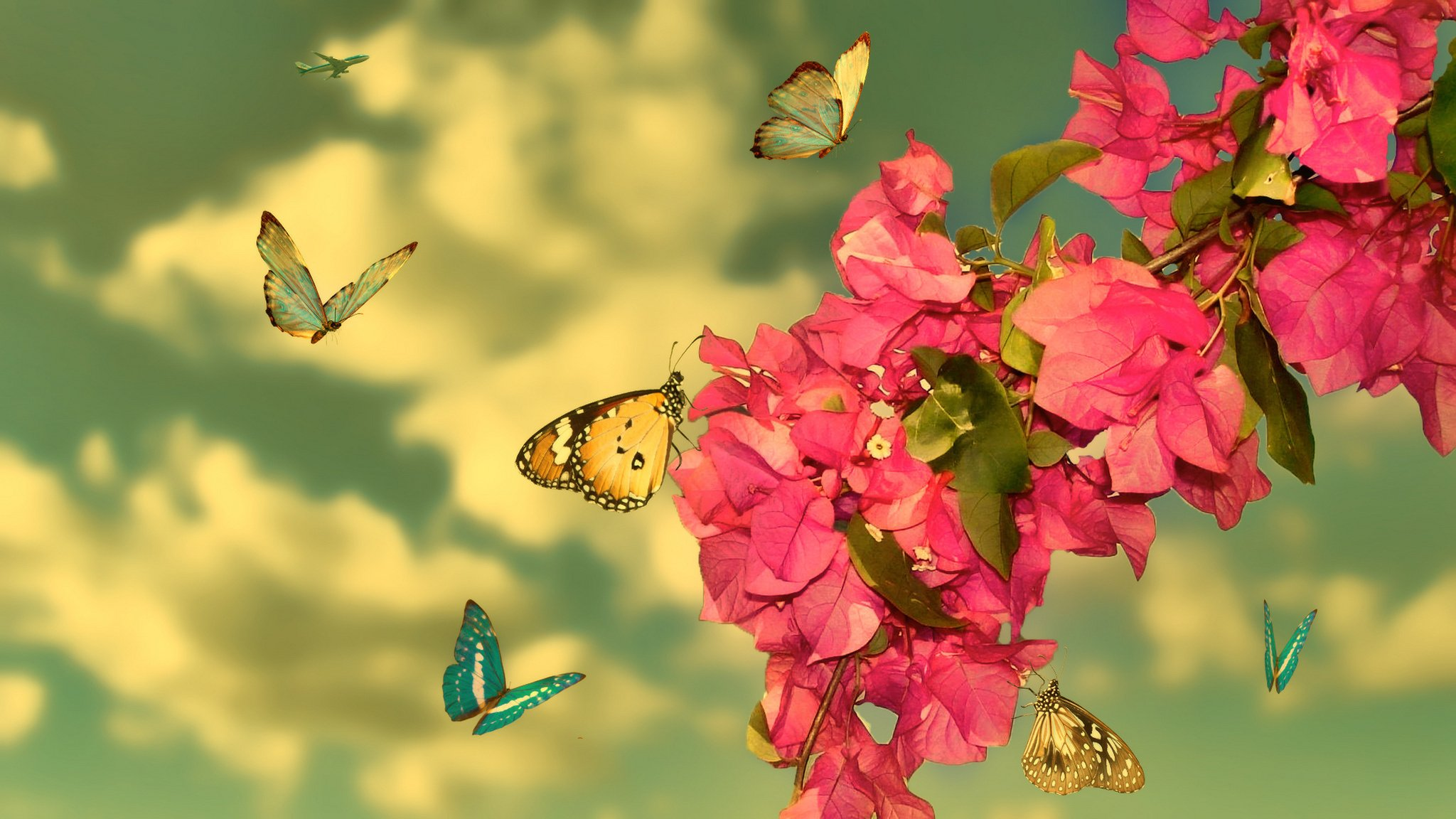 Animal butterfly flower beauty nature wallpaper 2048x1152