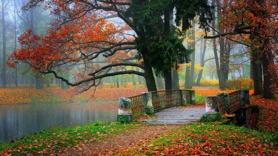 autumn tree leaves beauty nature landscape lake bridge wallpaper