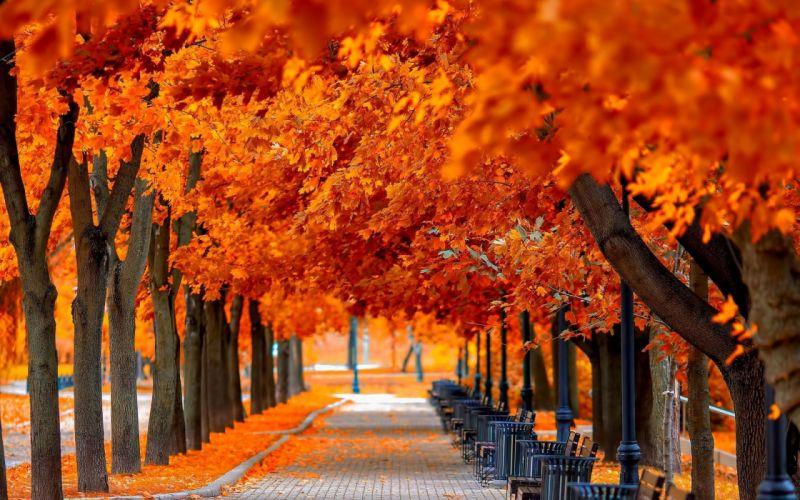 autumn tree leaves beauty nature landscape wallpaper