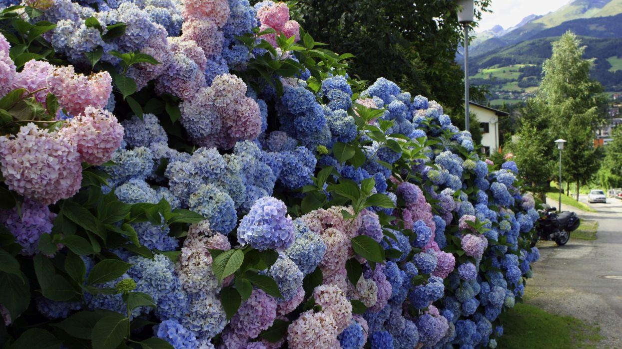 flower summer beautiful nature wallpaper