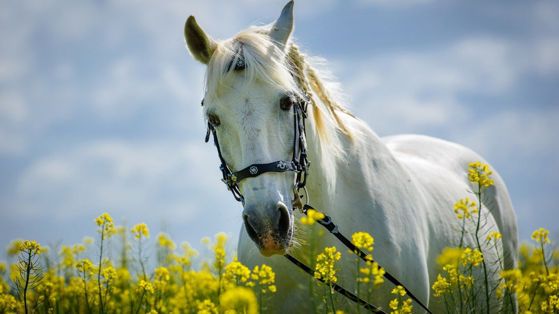 horses and flowers wallpaper - photo #7