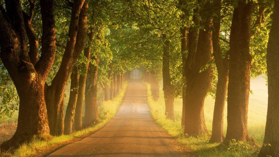 nature tree light road sun beauty landscape wallpaper