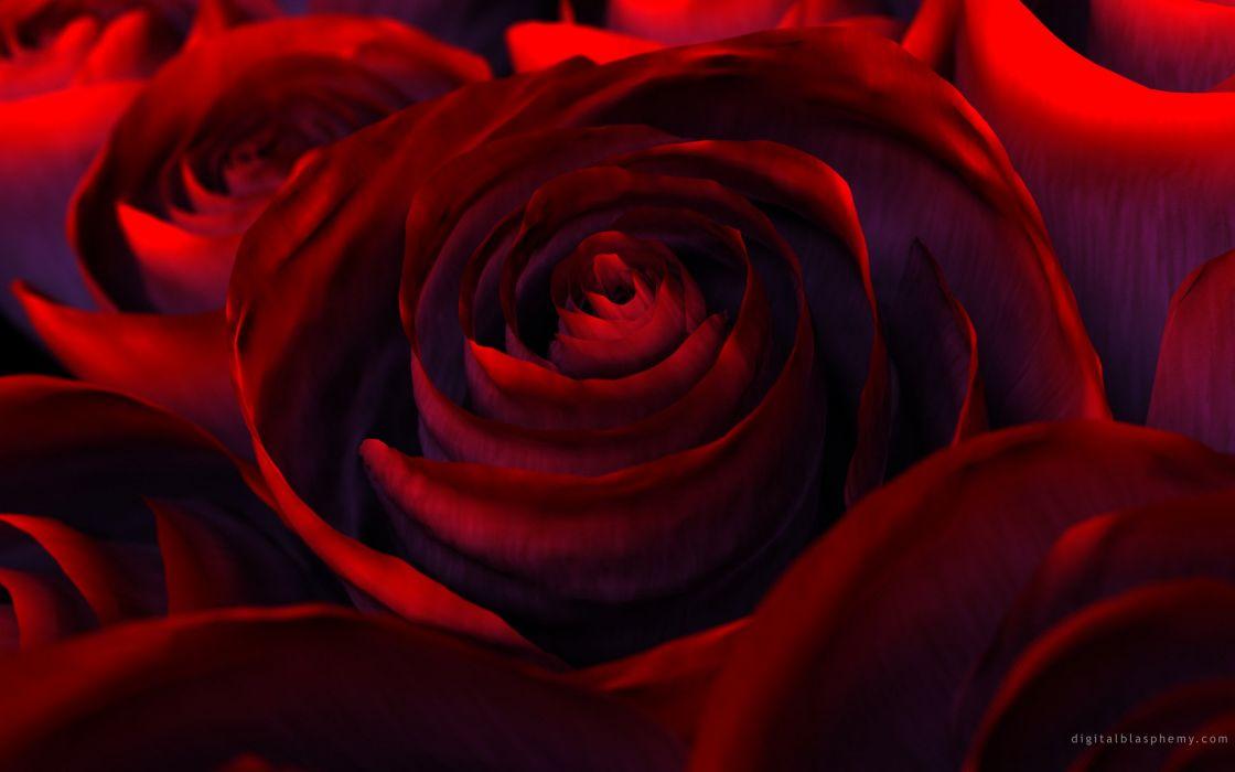 Rose flower beautiful nature red  wallpaper