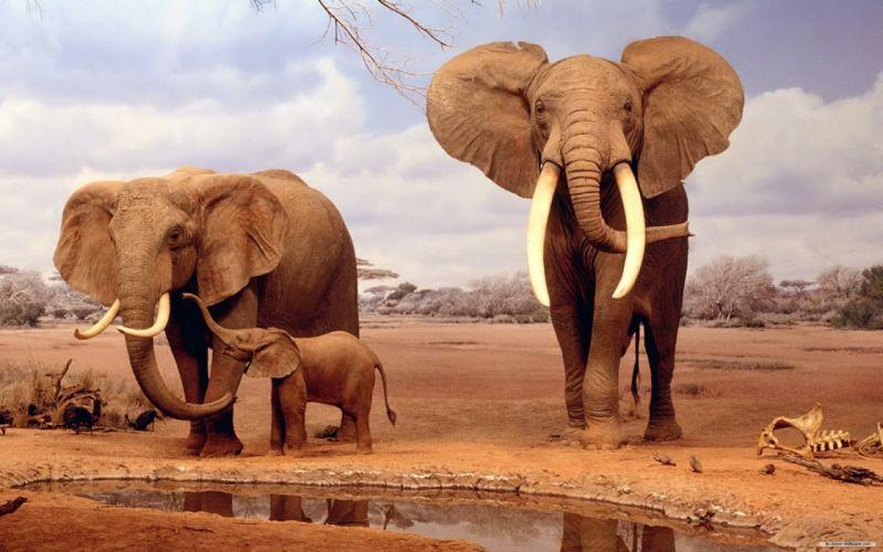 elefantes manada animales wallpaper