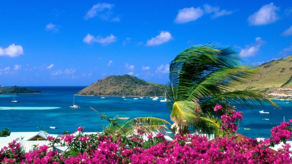 playa flores isla wallpaper