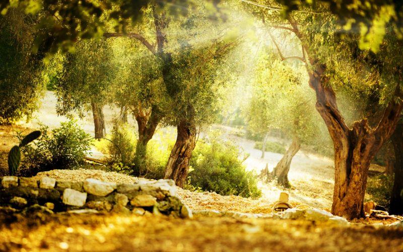 bosque naturaleza paisaje wallpaper