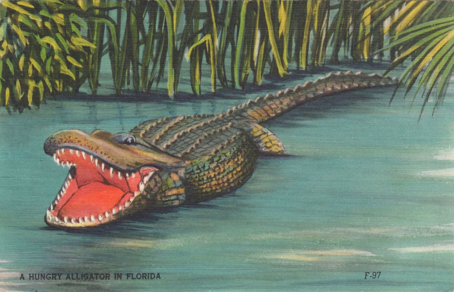 Открытка с крокодилом