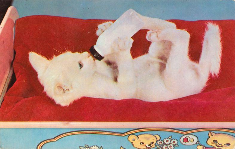 POSTCARD paper poster advertising vintage retro antique cat g wallpaper