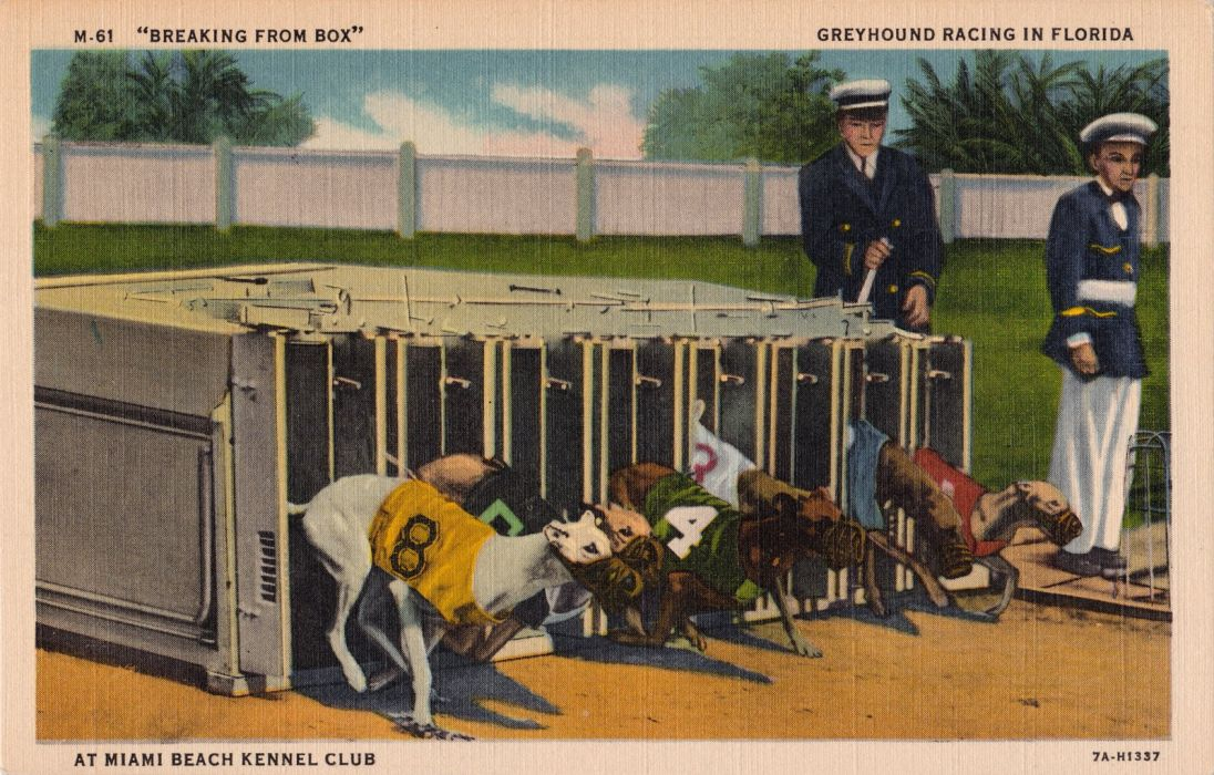 POSTCARD paper poster advertising vintage retro antique dog dogs f wallpaper