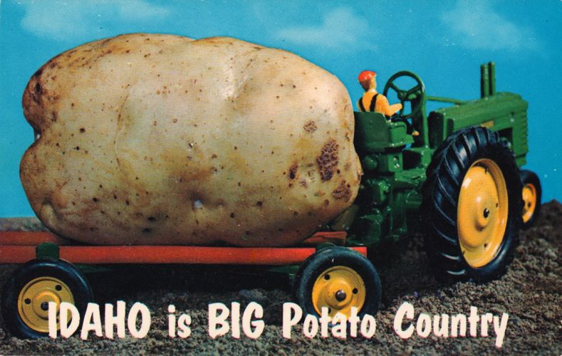POSTCARD paper poster advertising vintage retro antique humor funny comedy f wallpaper