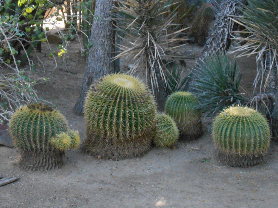 Palm Springs California Botanical Garden wallpaper