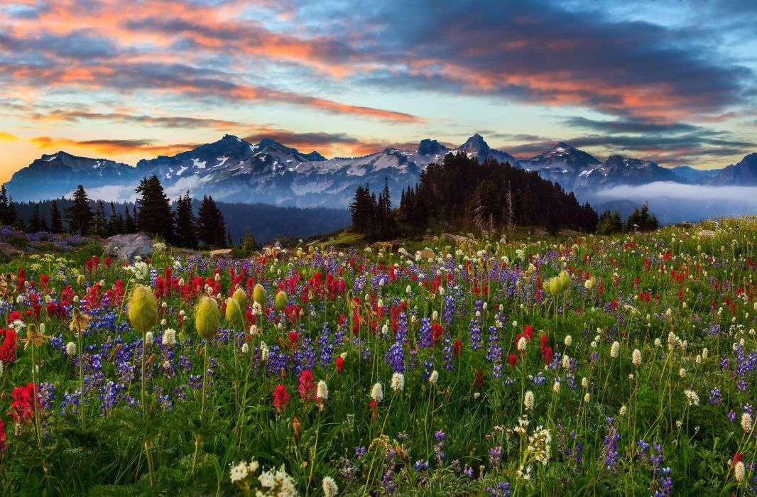 mountains sunset field flowers Mount Rainier Washington landscape wallpaper