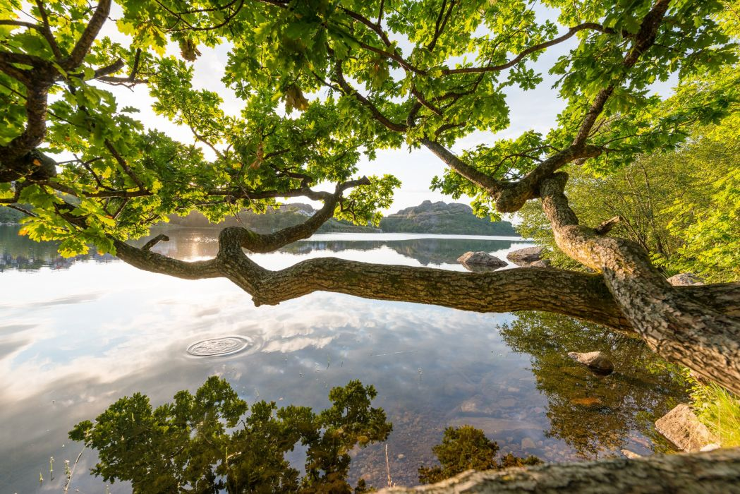 river spreading tree nature reflection wallpaper