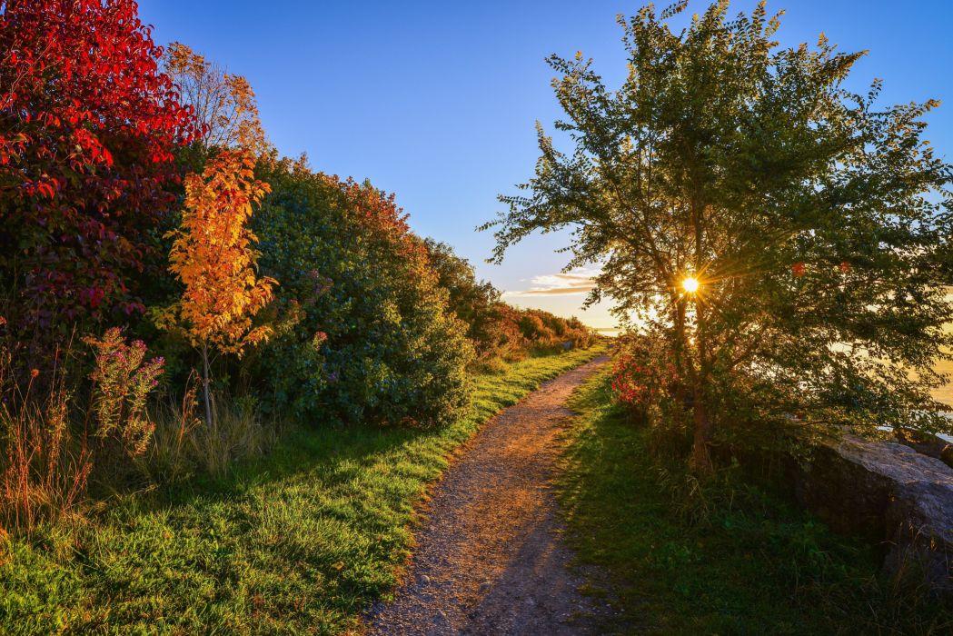 sunset road trees autumn landscape wallpaper