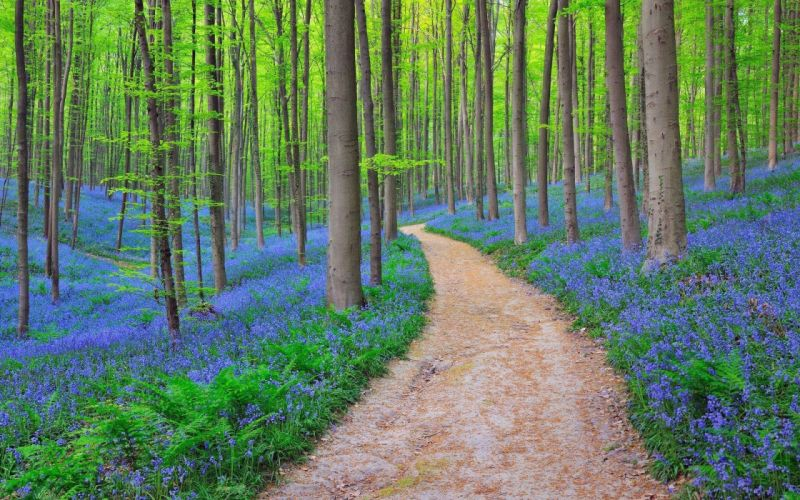 forest trees flowers road nature wallpaper