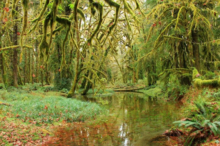 forest trees moss pond nature wallpaper