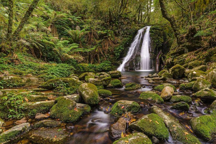 forest trees stream waterfall rocks moss nature wallpaper