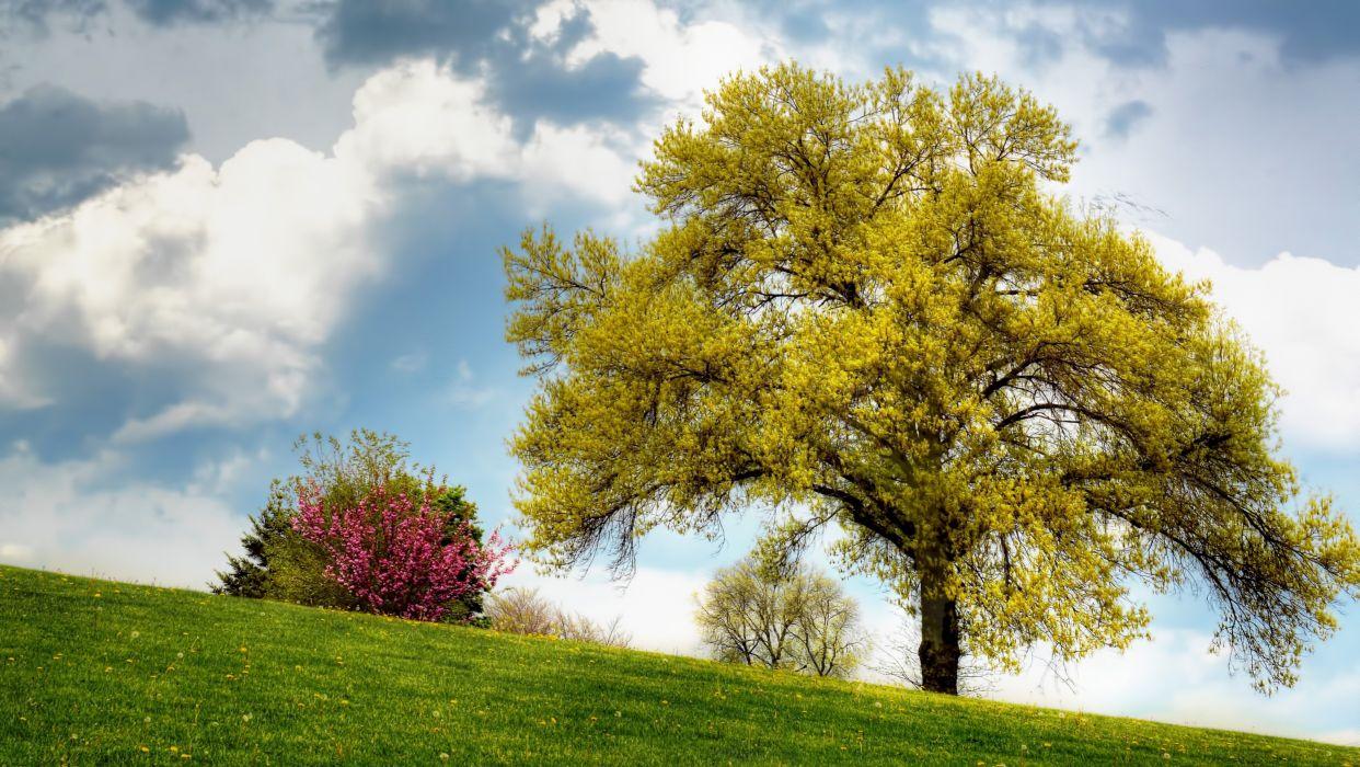 field hill trees sky landscape wallpaper