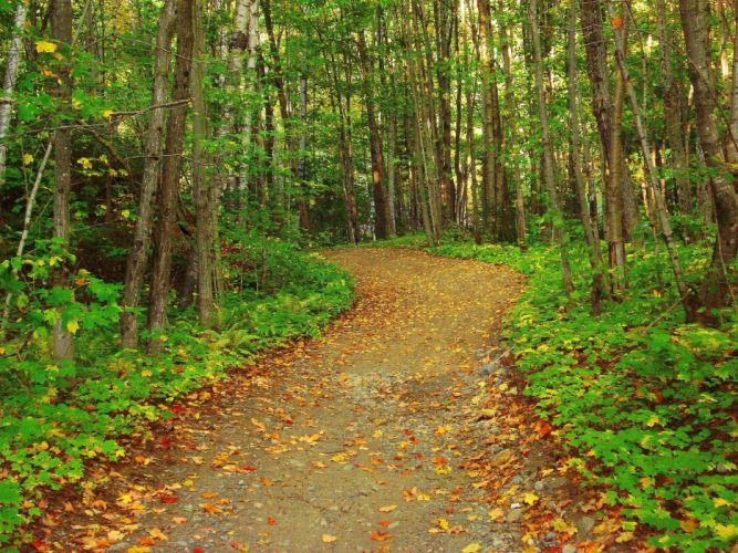forest trees road nature wallpaper