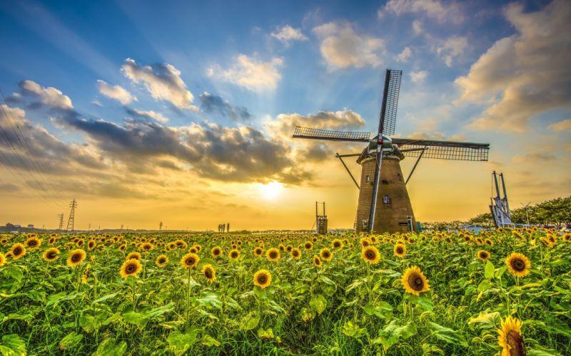 field sunflower sunset windmill landscape wallpaper