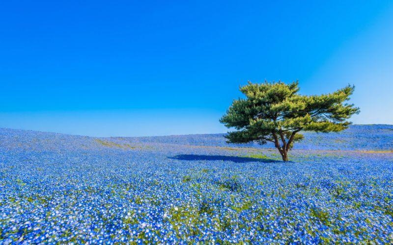field flower tree landscape wallpaper