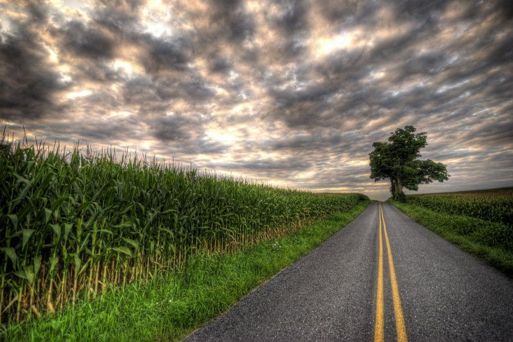 Field road tree landscape wallpaper