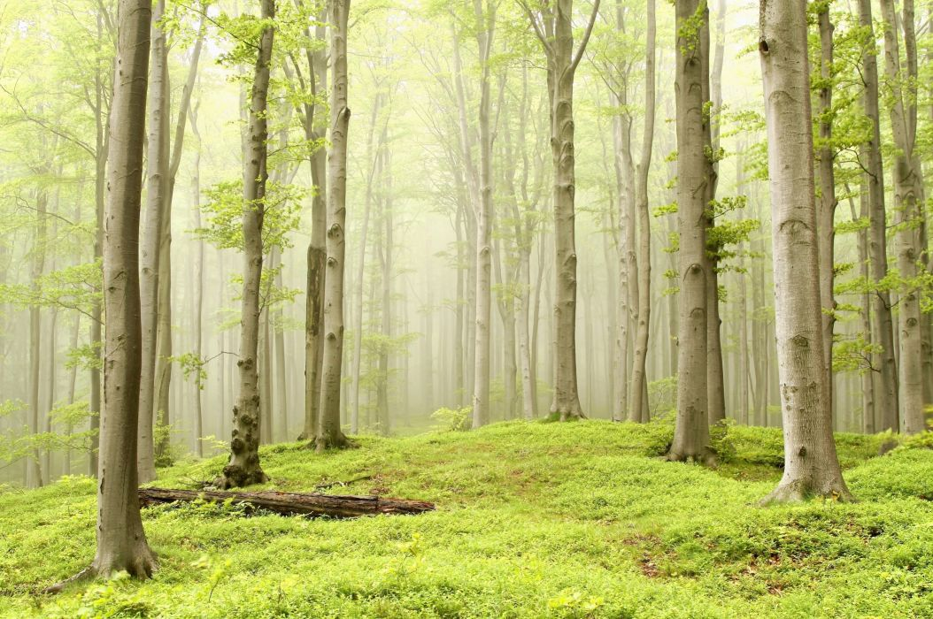 forest meadow trees fog nature wallpaper