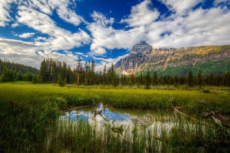 mountains swamp trees landscape wallpaper