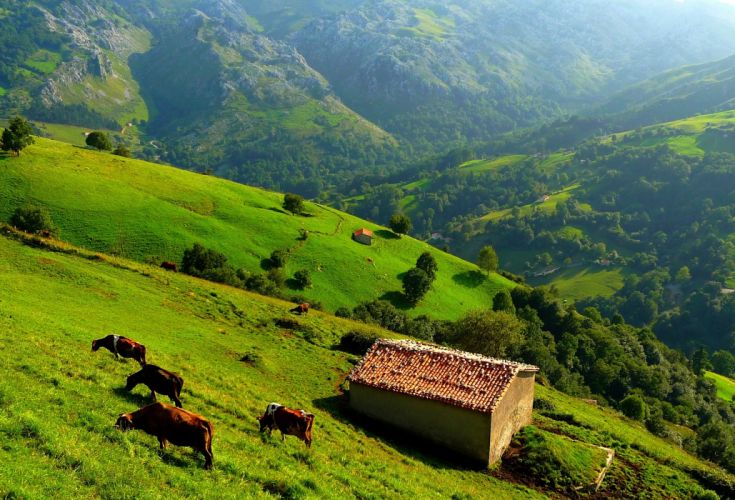 mountains hills trees grass house cow view from the top landscape wallpaper