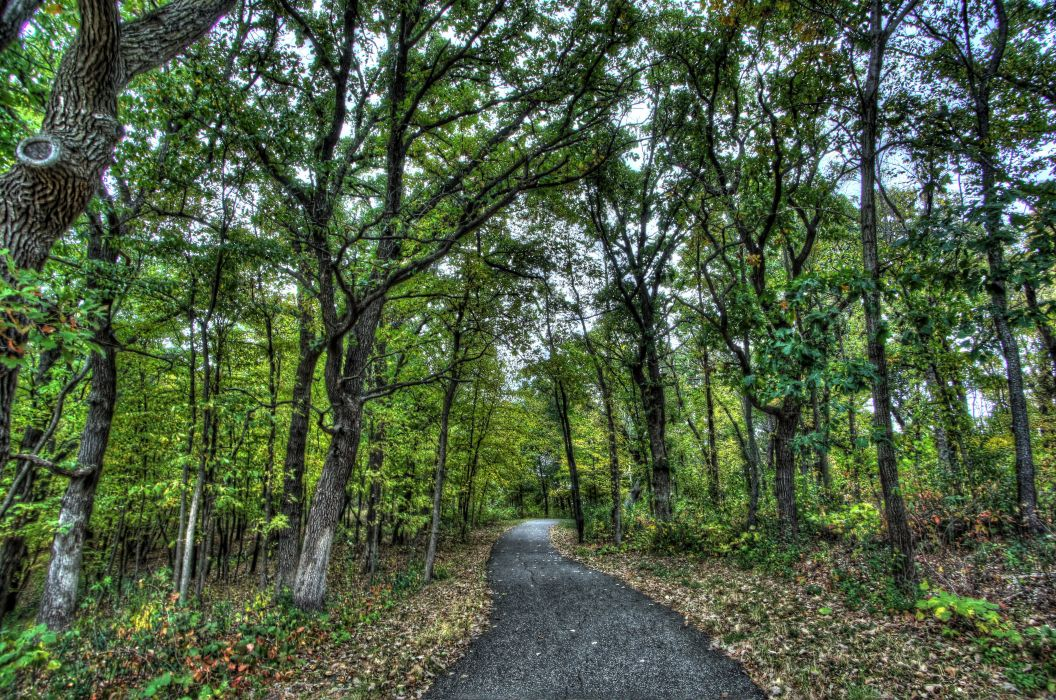 park forest trees road landscape wallpaper