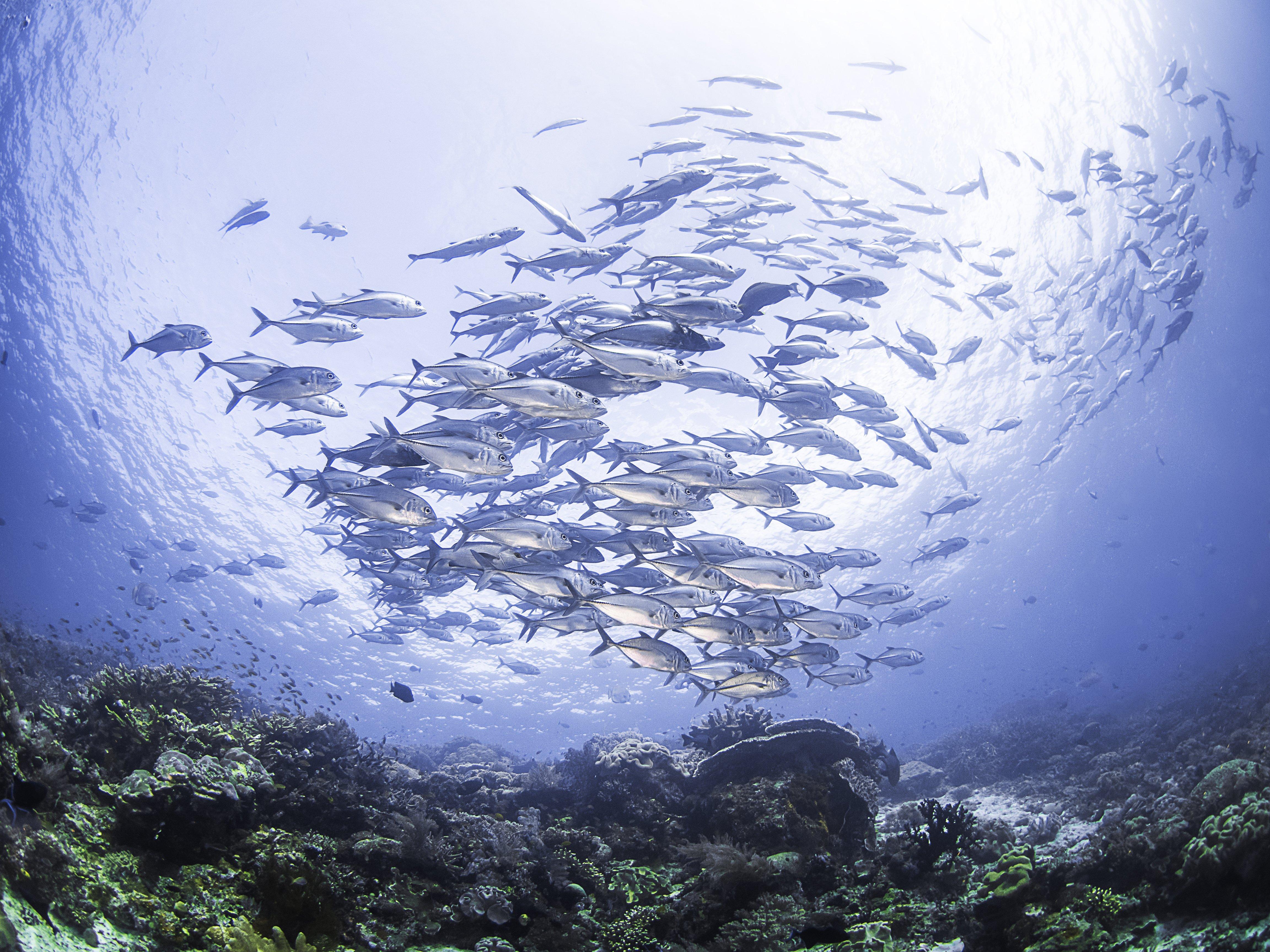 Sea Seabed Karalli School Of Fish Nature Ocean Underwater