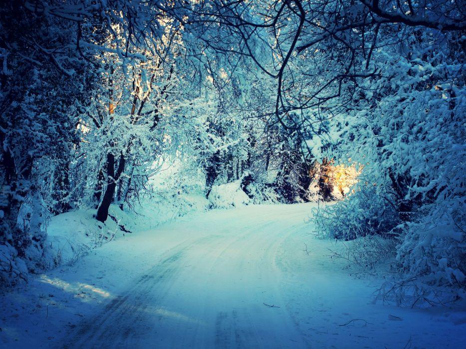 winter forest trees road landscape wallpaper