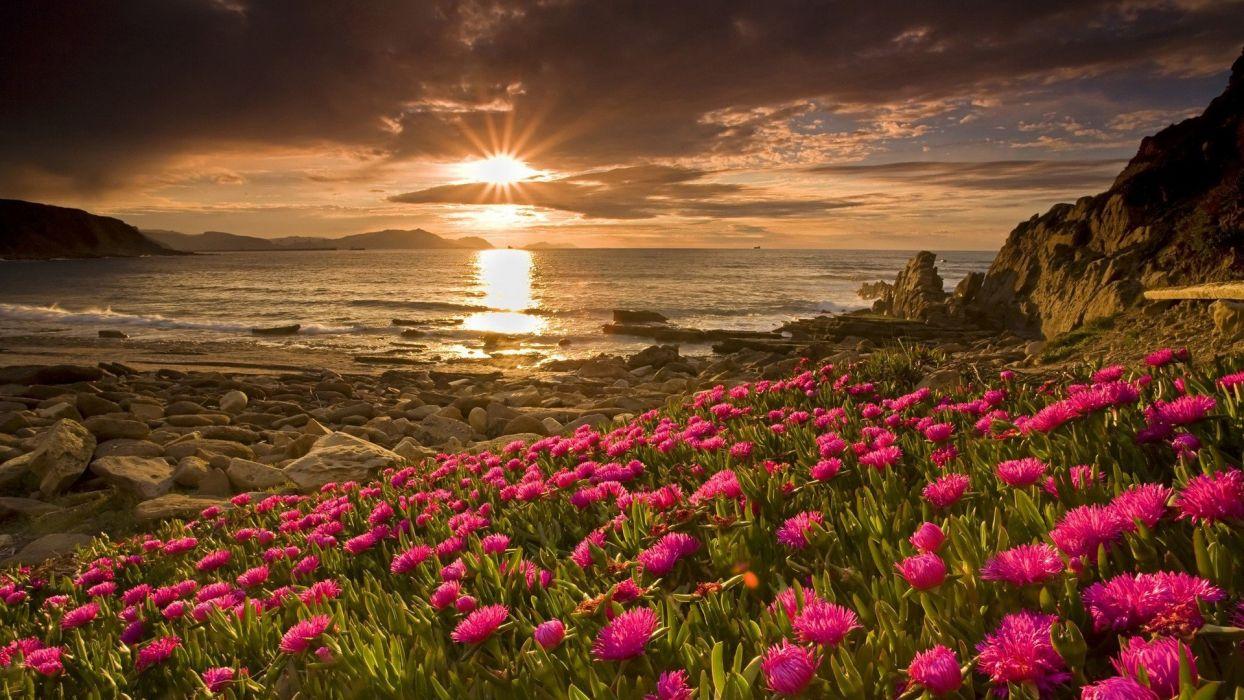 flores mar sol naturaleza paisaje wallpaper