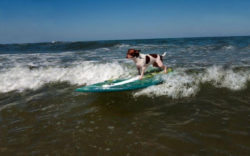 Sports dog surfing wave wallpaper