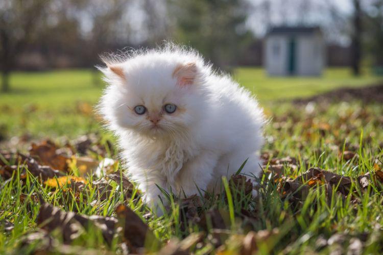 baby cat kitten f wallpaper