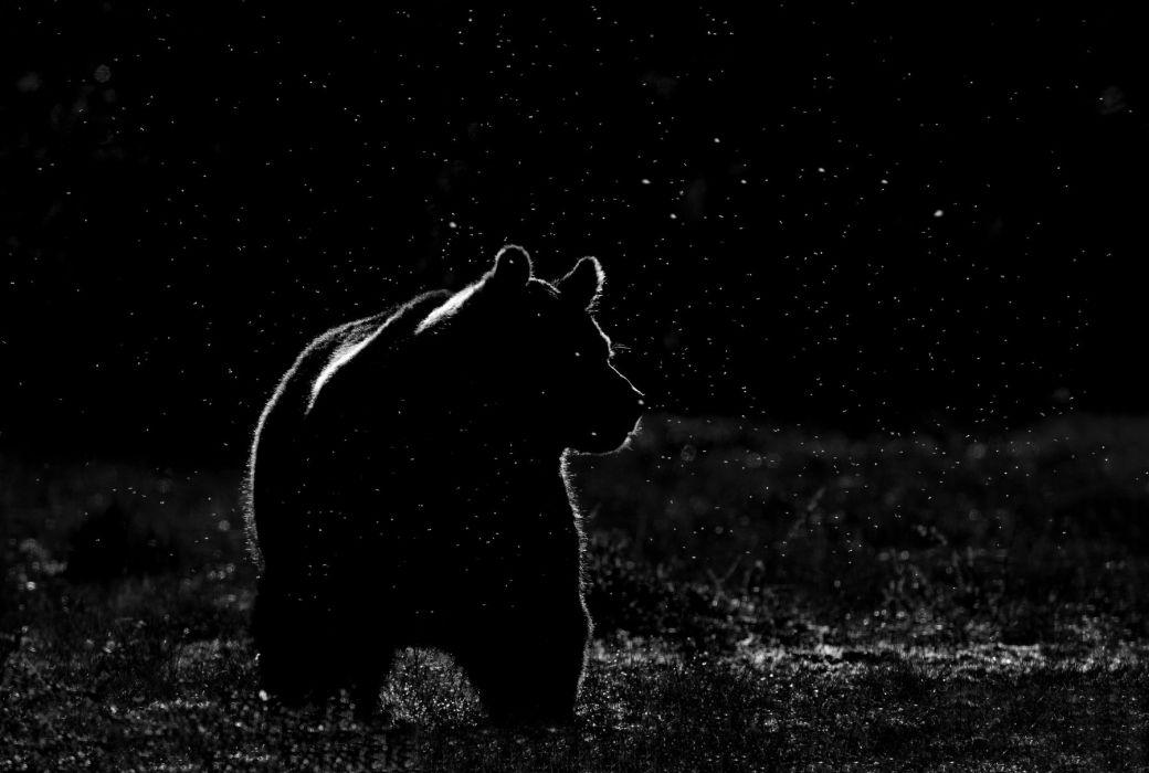 bear night space stars wallpaper