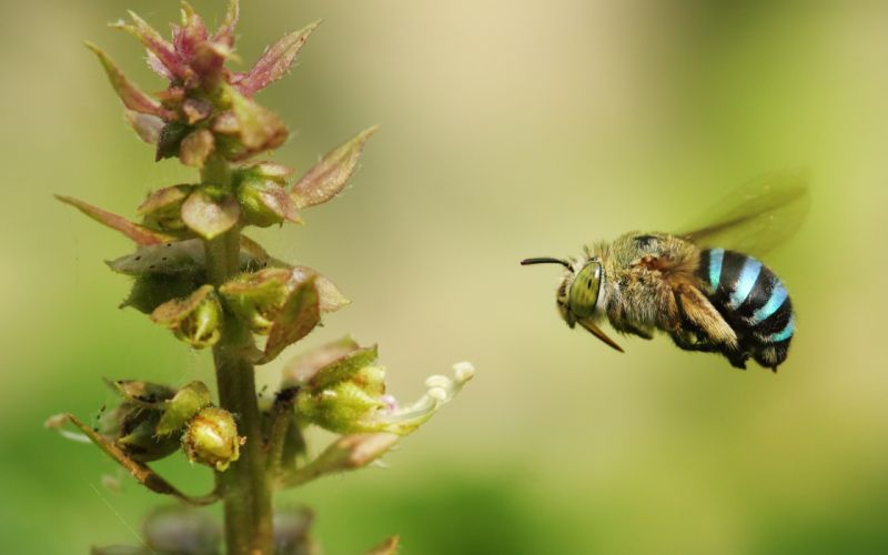 bee insect flower nature wallpaper