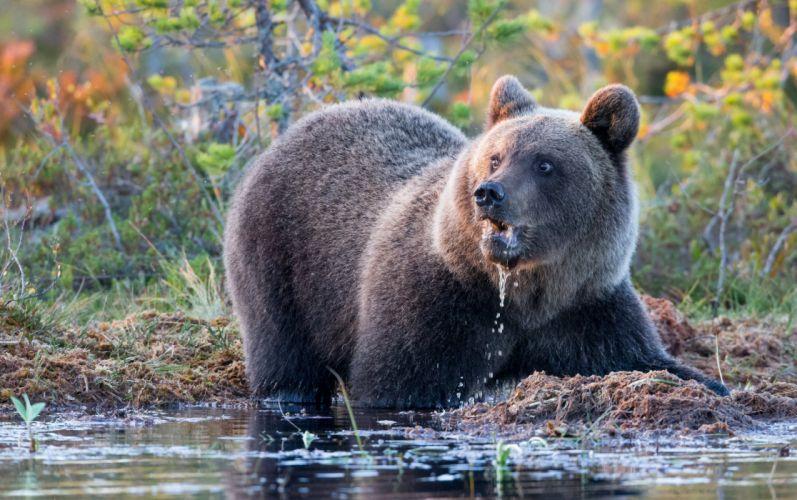bear river water fall frost autumn fishing wallpaper